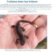 TritonCapture7176